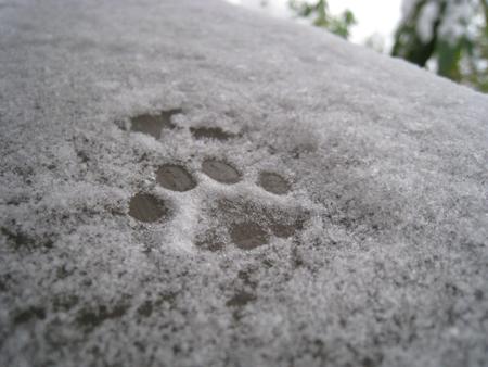 toefur_snow