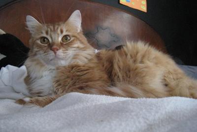 catpose1