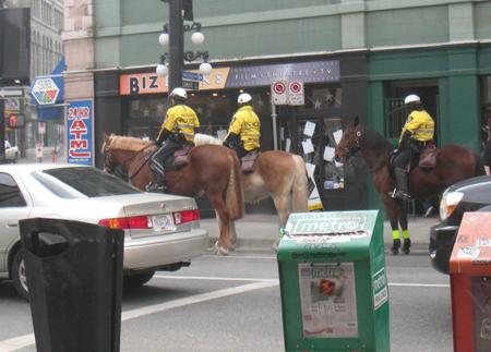 rcmp-horses