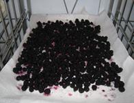 blackberries_all2