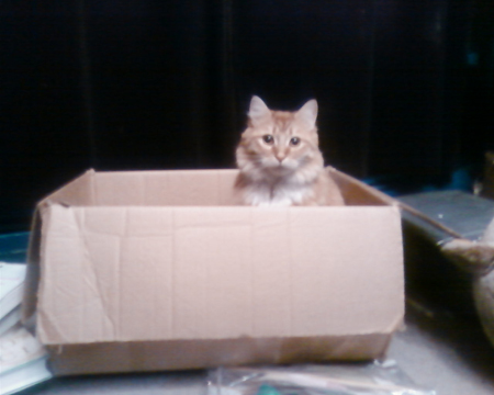 henry-moving-box