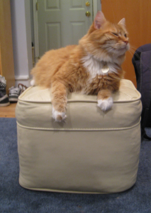 Henry, my cat, on his Ottoman Throne