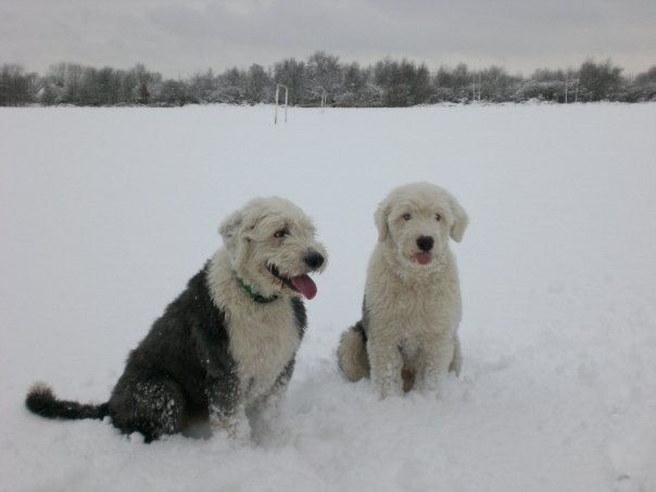 Dogs (Harvey & Oscar) on the Racecourse in Salford, Manchester