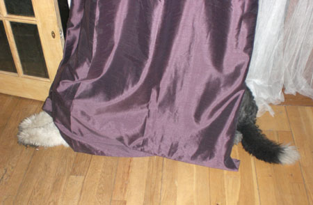 Oscar, the dog, sulks behind the curtain