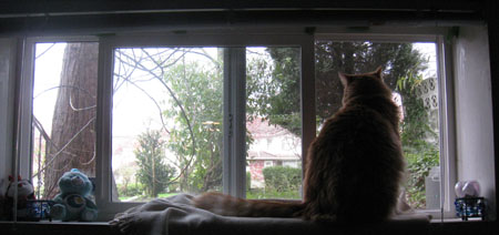 Henry, my cat, sits on the window sill