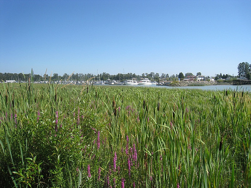 View of Deas Slough from Deas Island Regional Park
