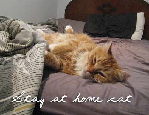 Stay at home Cat