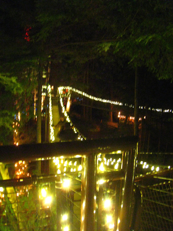Footpaths through the trees, 30 feet high at Treetops Adventure
