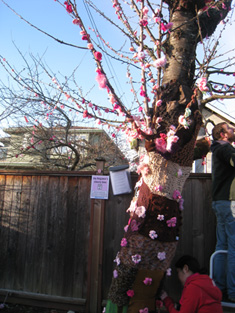 Cherry tree covered in yarn bark