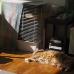 Henry sunbathing beside Chico