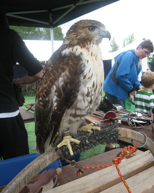 BC Highland Games 2011 - Falconry