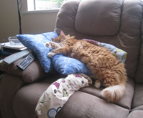 Henry takes over the couch pillows