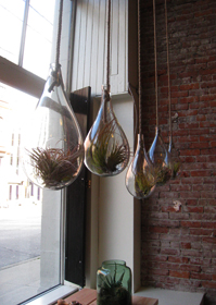 Hanging terrariums at Old Faithful Shop