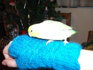Ivan on fingerless mitts I made for Jesse (canadiantreefrog)