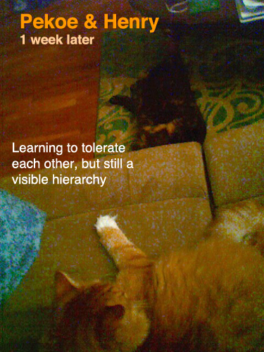 Pekoe & Henry's hierarchy